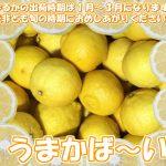 haruka_001