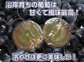 kyohou_001